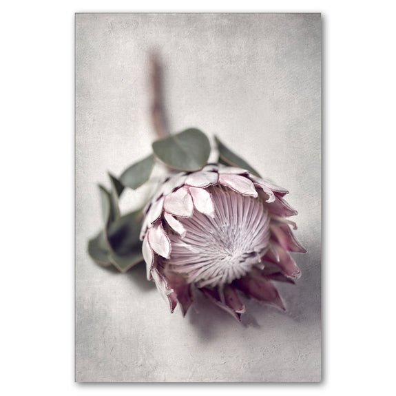 Unframed Art Print - Pale Proteas