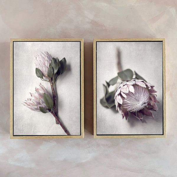 Pale Proteas - Set of 2x A4 Art Prints - ON SALE