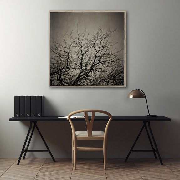 Reaching Trees Sqr - 100x100cm Art print