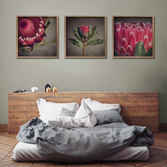 Red Protea - 3x Square Art prints