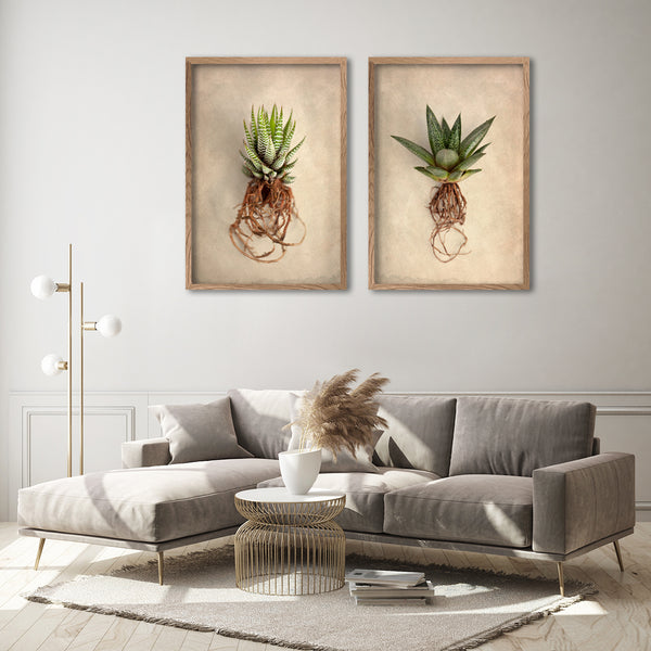 Succulent Study - 2x Large Art Prints
