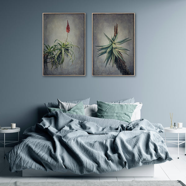 Aloes - 2x Large Art Prints
