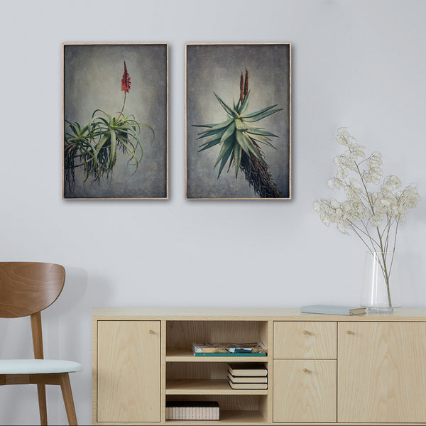 Aloes - 2x A3 Art Prints