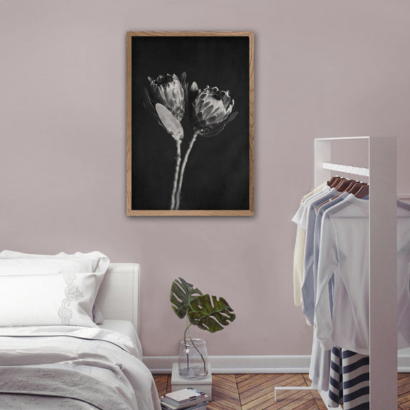 Black and White Proteas - 1x Large Art print