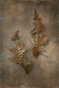 Earthy Ferns - 2x Large Art prints, set 3