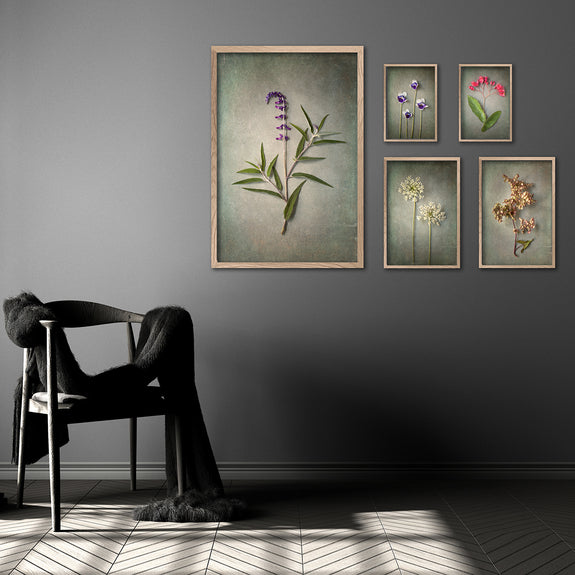 Foraged Gallery Wall - 5x Art prints, set 3
