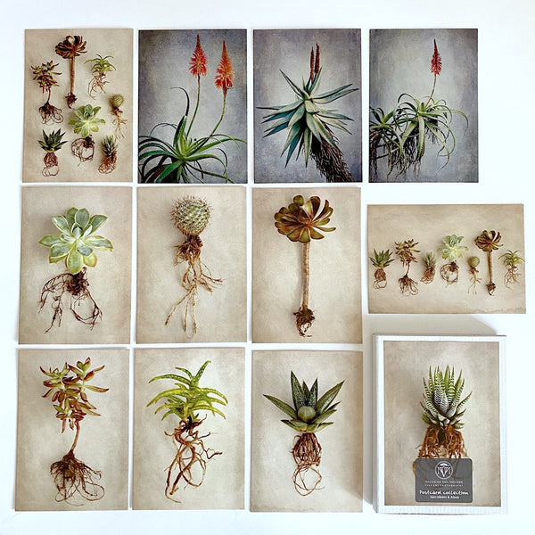 Postcard Collections - Succulents & Aloes