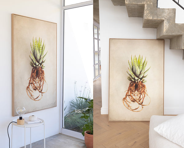 Succulent Study 1 - 1x 100x150cm Art Print - ON SALE