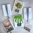 Postcard Collections - Protea Mix