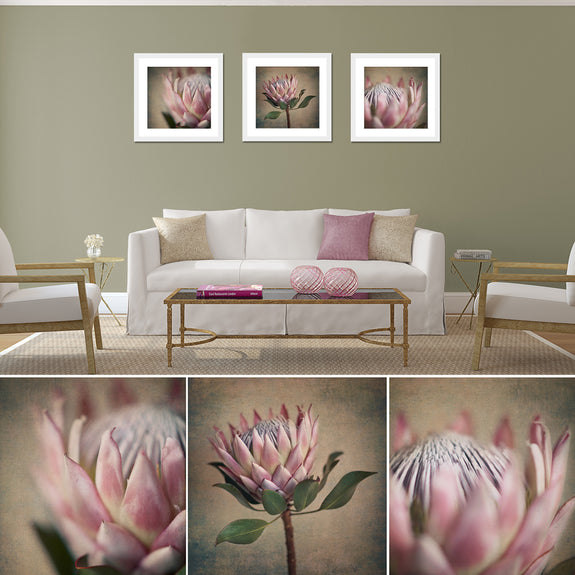 Protea Still - 3x Square Art prints, set 2