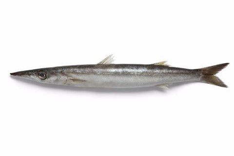 Barracuda  Thinda Fish 1 Kilo