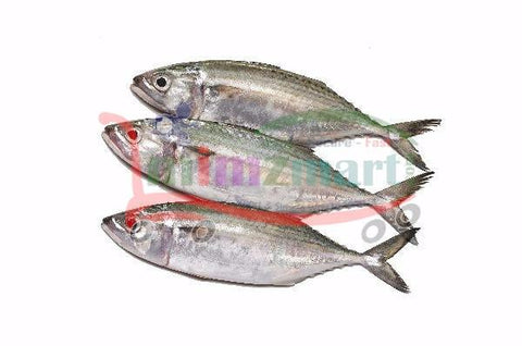 Mackerel Small 1 Kilo