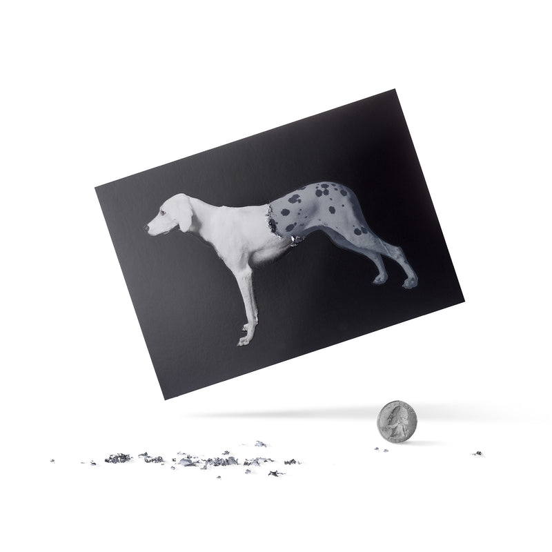 Scratchable Postcard-Dog
