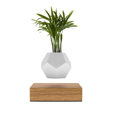 Lyfe Floating Planter Oak Base
