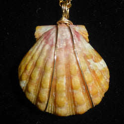 Kauaian sunrise shell necklace