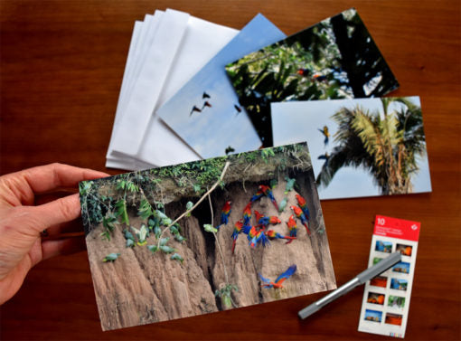 Wild Parrot Note Cards