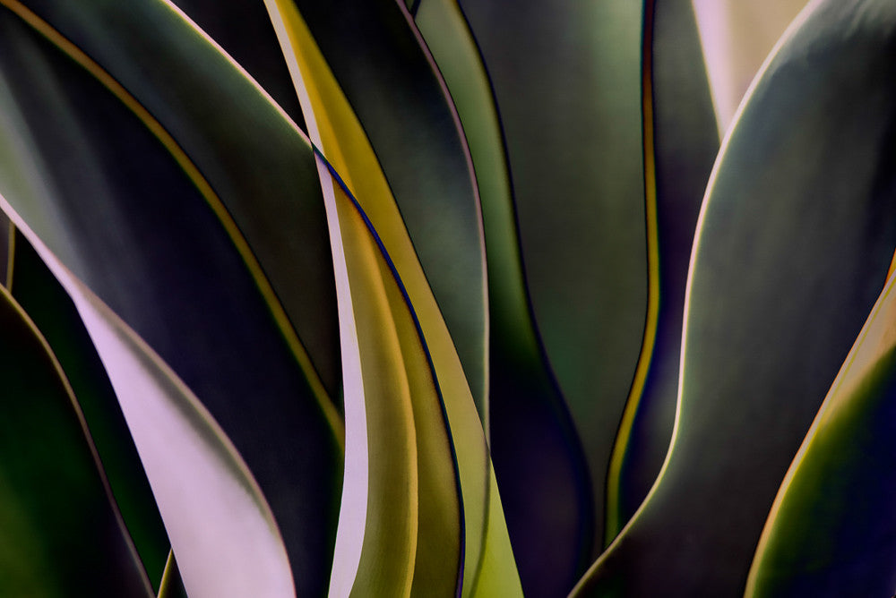 Cactus Abstraction 07 - Ed Freeman Fine Art