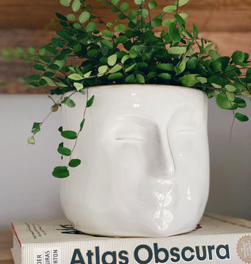 arsene face planter - Piper & Chloe