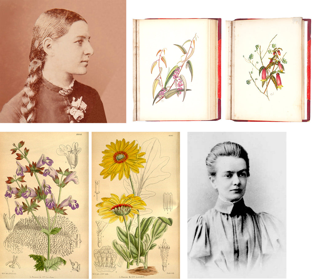 Meet Gertrude & Matilda: Celebrating women botanical artists