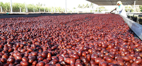 out of the tanks onto the drying beds