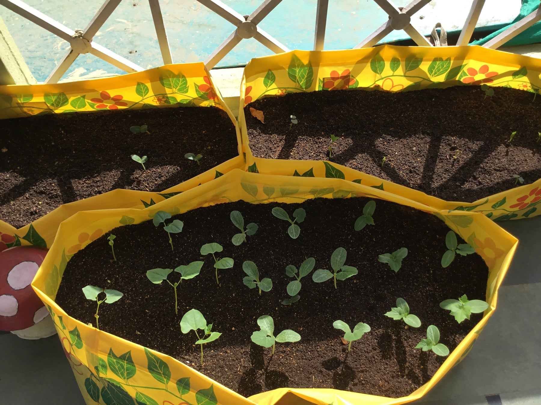 How We Started Our Organic Vegetable Garden
