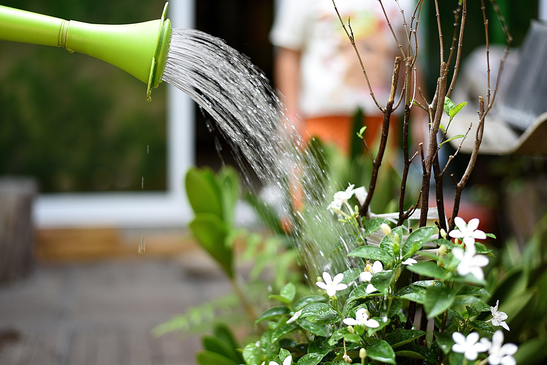 Avoid overwatering mistakes that can kill your flowers