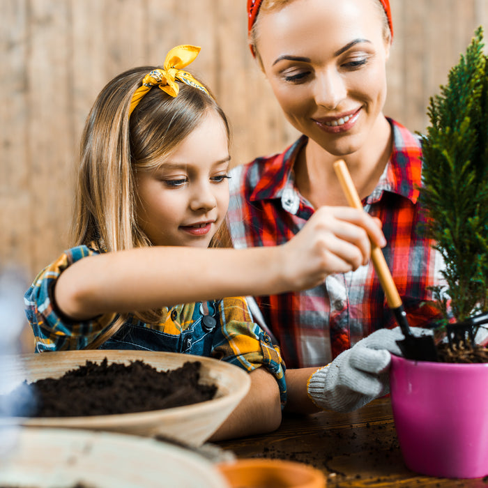 Best Potting Soil for Indoor/Outdoor & Terrace Gardening