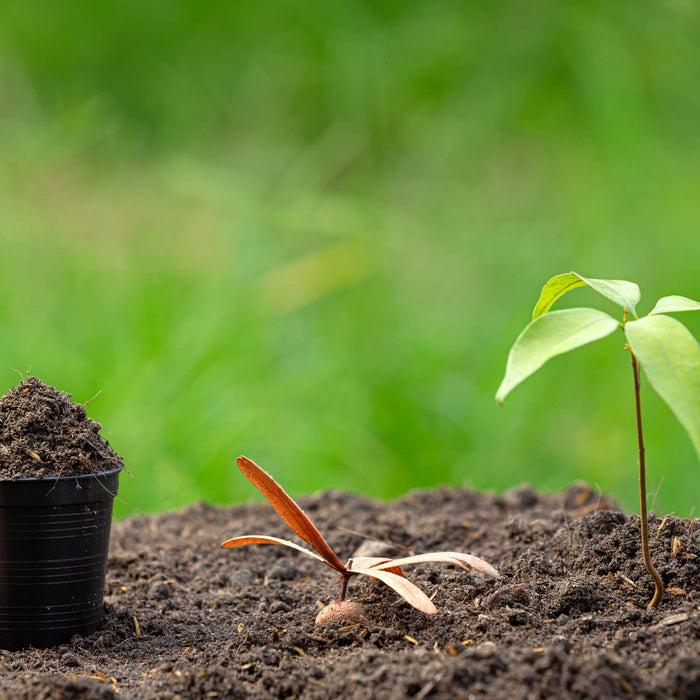 How to Make Soil More Acidic Organically for Gardening