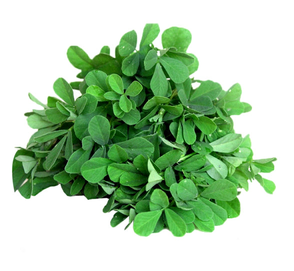 Methi (Fenugreek)- 100 Seeds