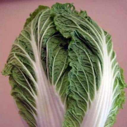 Chinese Cabbage- 50 Seeds