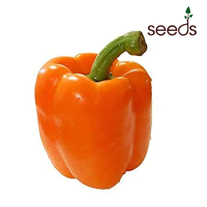 Capsicum Orange- 30 Seeds