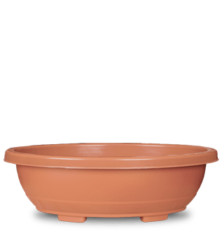 Bonsai Plastic Planters Terracotta Color, Beautiful and Professional, Durable (Set of 2) - Casa De Amor Organic Gardening India