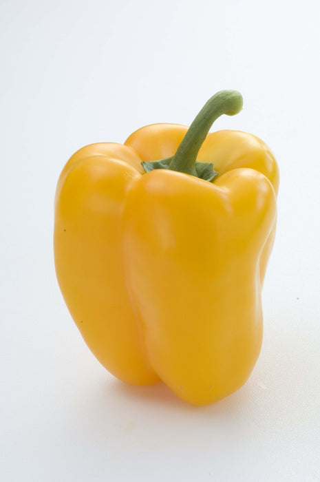 Capsicum Yellow- 30 Seeds
