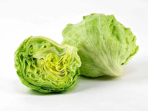 Lettuce Ice Burg - 100 Seeds