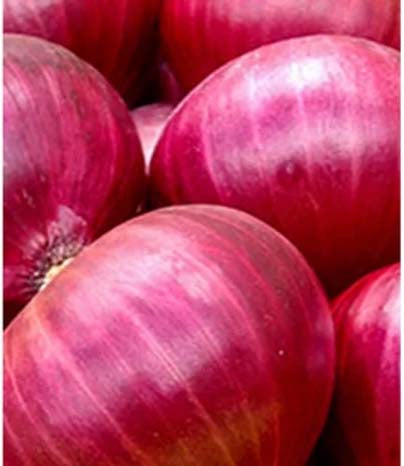 Onion Red - 100 Seeds