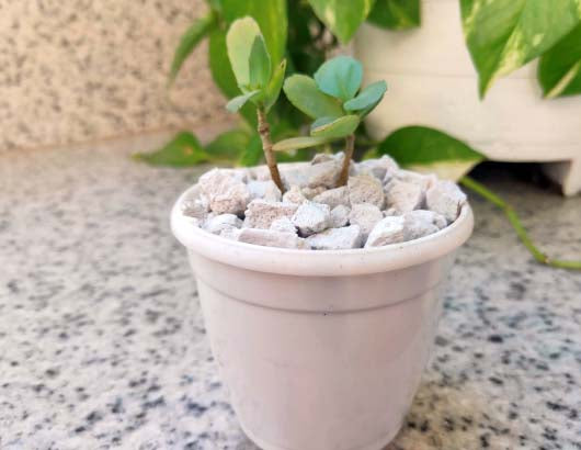 Casa De Amor Pumice Organic Soil Amendment for Bonsai and Succulents