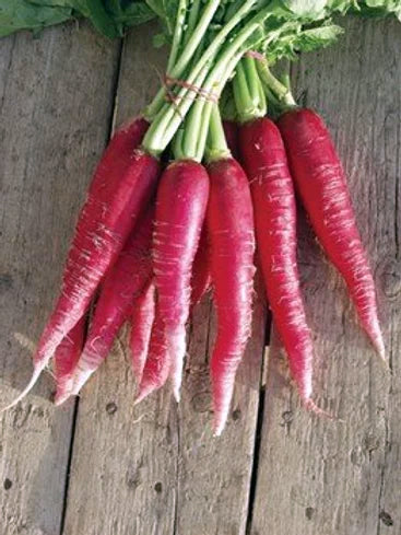 Radish Red Long- 100 Seeds