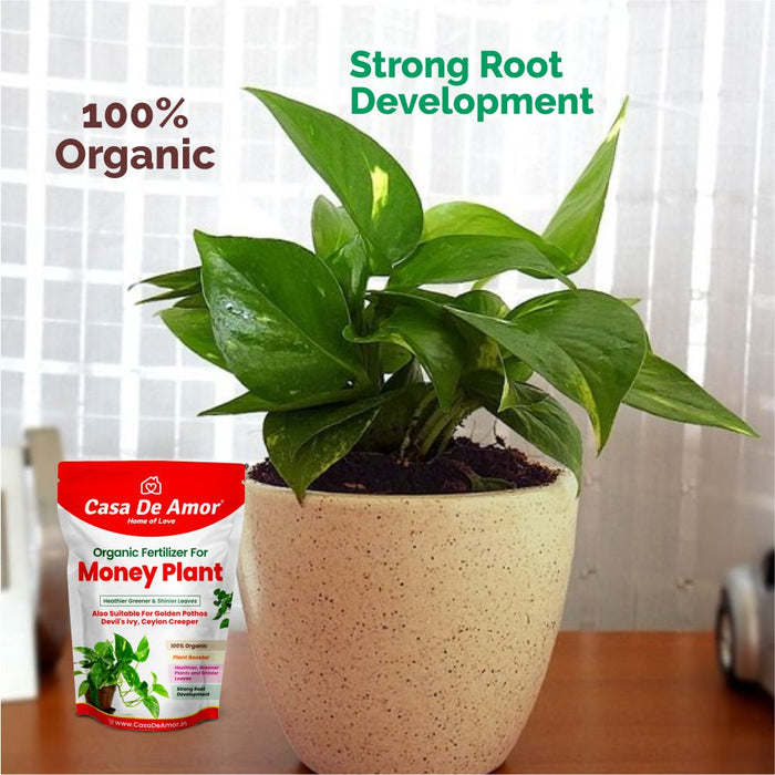 Money Plant Fertilizer, Heathier greener and Shinier leaves for Indoor and Outdoor Gardening