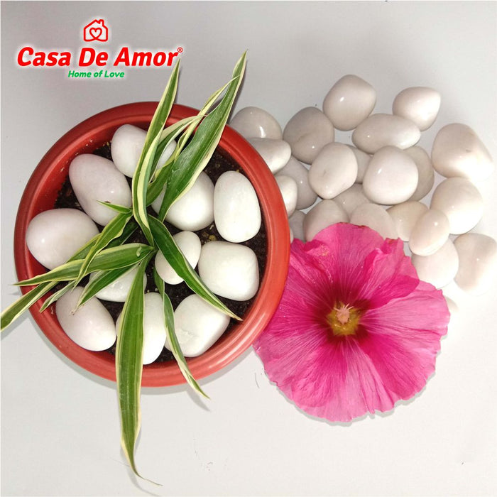 Casa De Amor Pebbles Polished Glossy Home Decorative Vase Fillers Stone White
