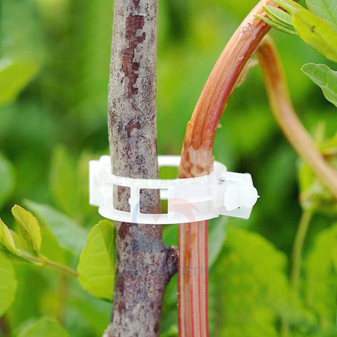100pcs Tomato Veggie Garden Plant Support Clips For Trellis Twine Greenhouse - Casa De Amor Organic Gardening India