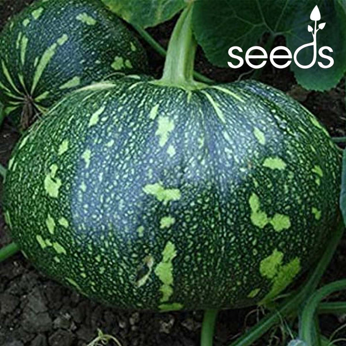 Pumpkin Bheema- 10 Seeds