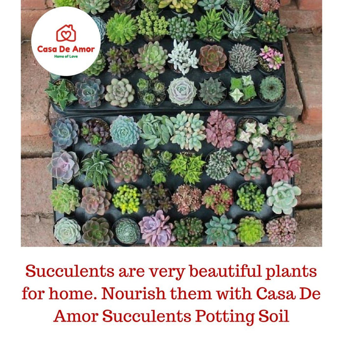 Succulents Potting Soil 100% Organic Special Research Based Formula for All Succulent Plants - Casa De Amor Organic Gardening India