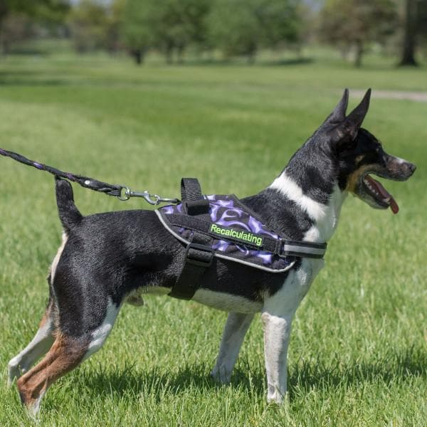 BrilliantK9 Ergonomic Dog Harness Garminn