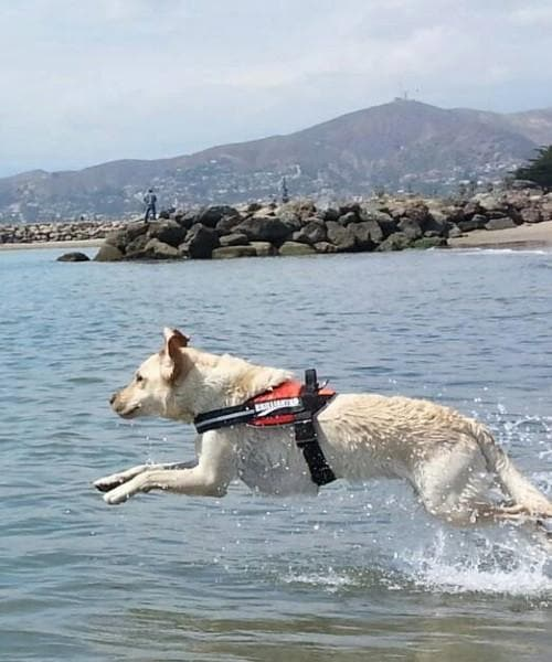 BrilliantK9 Ergonomic Dog Harness XLG
