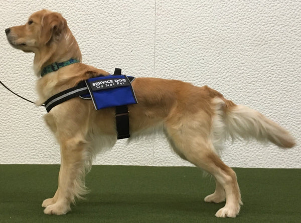 BrilliantK9 Service Dog Harness Lucy Medium