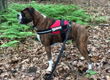 BrilliantK9 Ergonomic Dog Harness Lucy Large