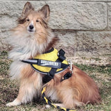 BrilliantK9 Ergonomic Dog Harness Stripper
