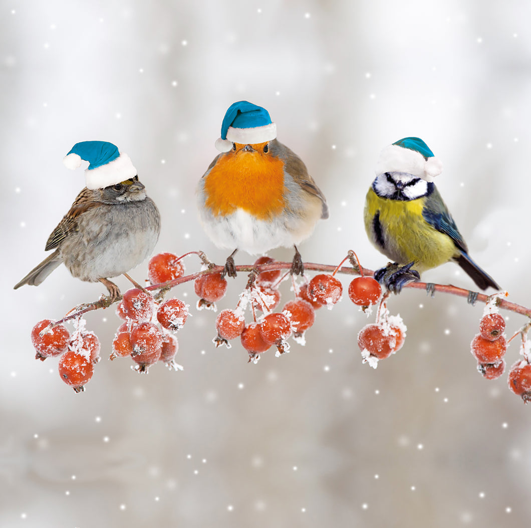 Parkinson's UK Birds and berries charity Christmas cards
