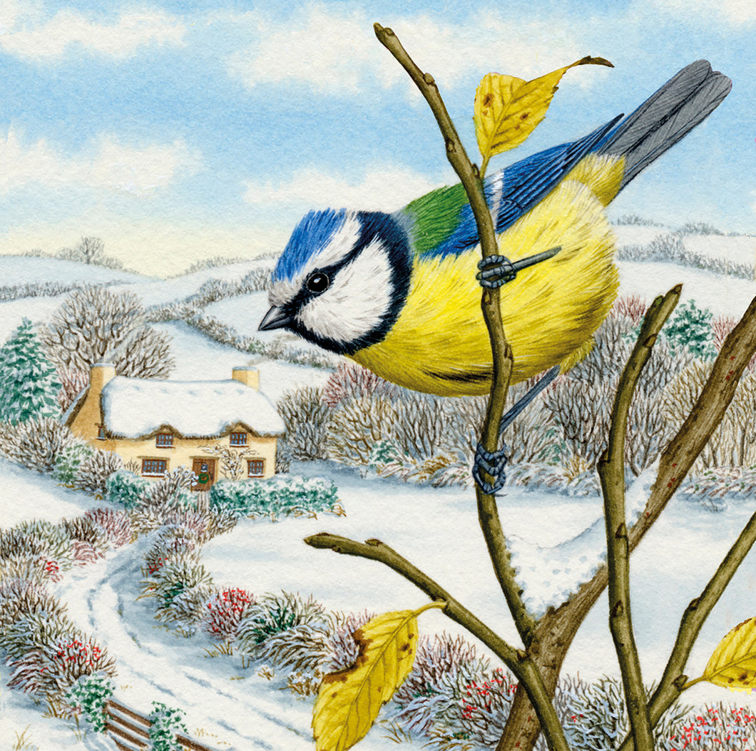 Parkinson's UK Blue tit charity Christmas cards