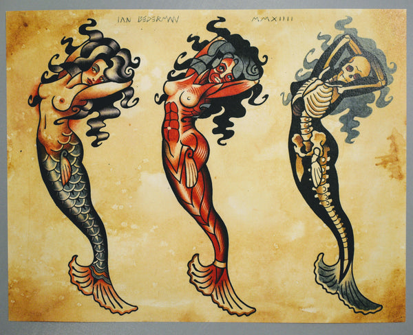 Mermaid Anatomy By Ian Bederman Poster